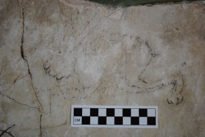Figure 6: Camel and Greek graffiti from the south room of the bathhouse in Square D:6/13