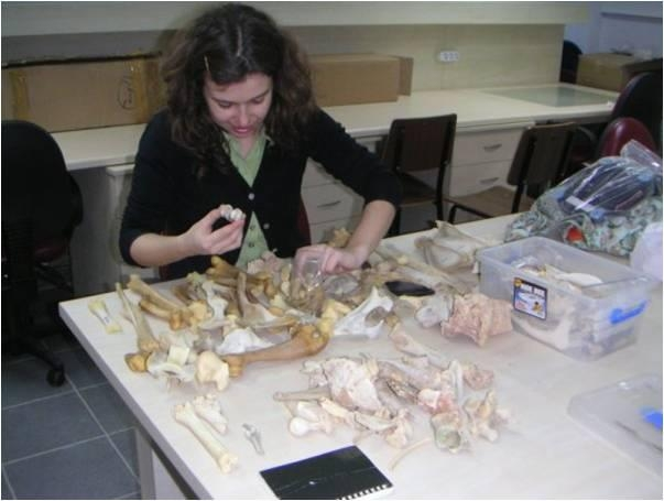 Fig 14: Zooarchaeological study is undertaken by Canan Çakırlar (Groningen University, Netherlands)
