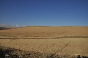 Wheat field in the village of Sul, near where we excavate.