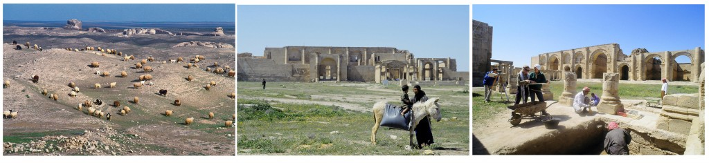 (Left) Flocks grazing inside the ruins with ancient city walls in the background. Photo courtesy of Erick Bonnier. (Middle) Woman with child on donkey with main buildings in the great temenos in the background. Photo courtesy of Erick Bonnier. (Right) Italian archaeologists and Iraqi workers at work in the great temenos. In the background the iwans of Hatra's main temple. Photo courtesy of Erick Bonnier.